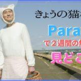 「きょうの猫村さん」の見どころ